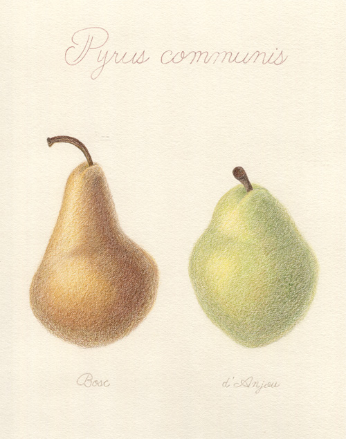 Completed Pear