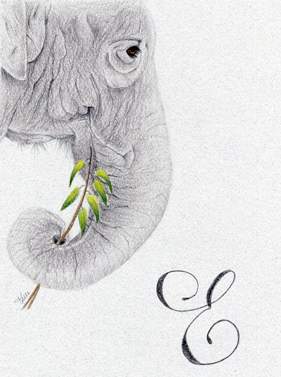Colored Pencil Elephant