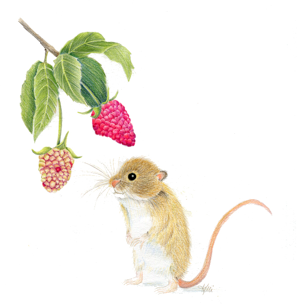 Mouse with Raspberries