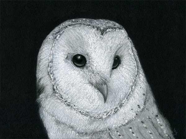 Barn Owl - Pastel on black charcoal paper