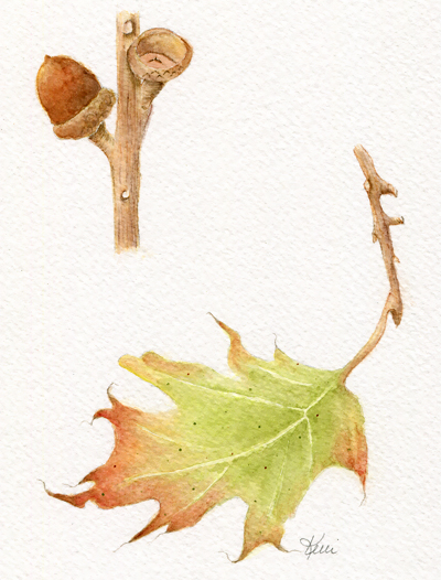 Red Oak Leaf and Acorn - Painting Autumn Leaves and Trees