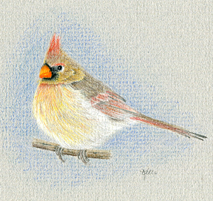 Female Cardinal - Pair of Cardinals
