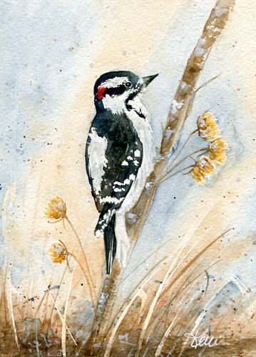 Downy Woodpecker - Woodpeckers in Watercolor