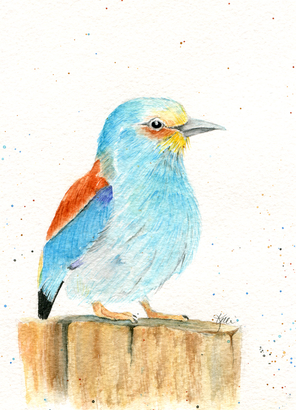 European Roller - painting birds