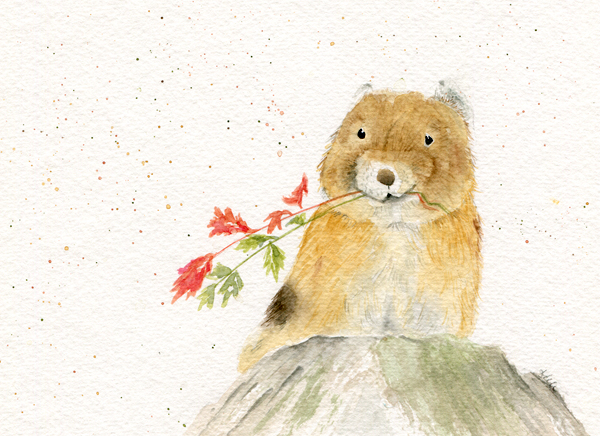 American Pika - Threatened/Endangered Animal Series