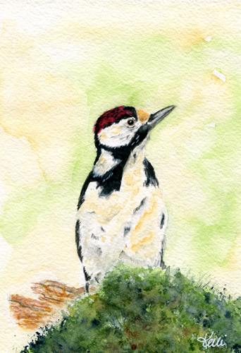 Woodpecker - Woodpeckers in Watercolor